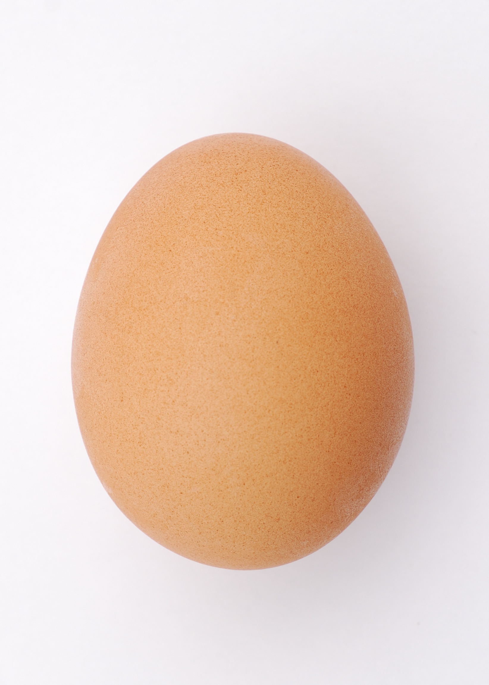 A chicken's egg by Sun Ladder for Wikimedia